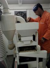 """ניקוי זרעי קינואה בעזרתה האדיבה של חברת Top Seeds,  ד""""ר ליאור רובינוביץ'."""